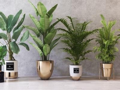 现代绿植盆栽组合3d模型【ID:333102897】