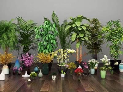 现代兰花百合玫瑰绿植盆栽组合3D模型