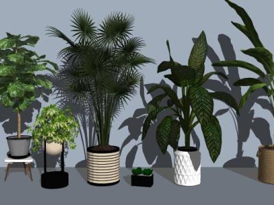 现代绿植盆栽植物SU模型下载【ID:129967845】