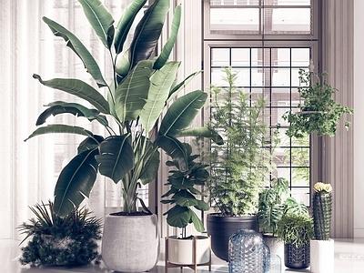 现代植物3D模型【ID:332915889】